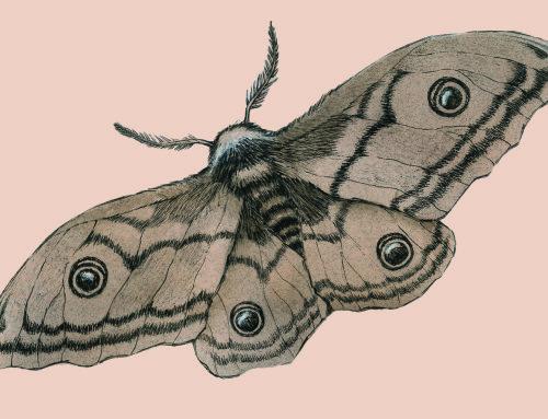 Moth and Love presente su Liburni 45!