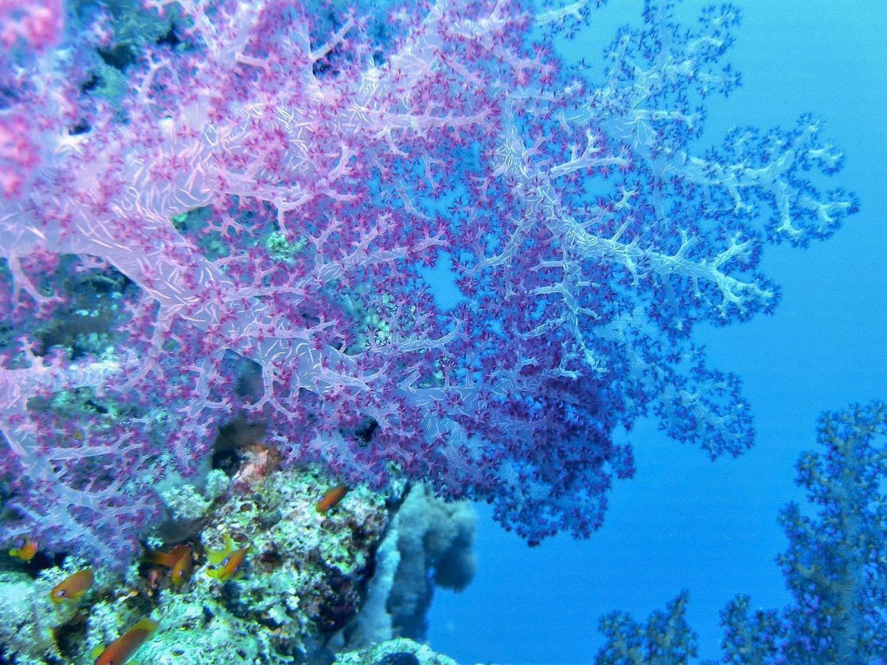 underwater-1268659_1280